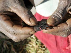 Les rasoirs pour les mutilations sexuelles féminines ©Reuters
